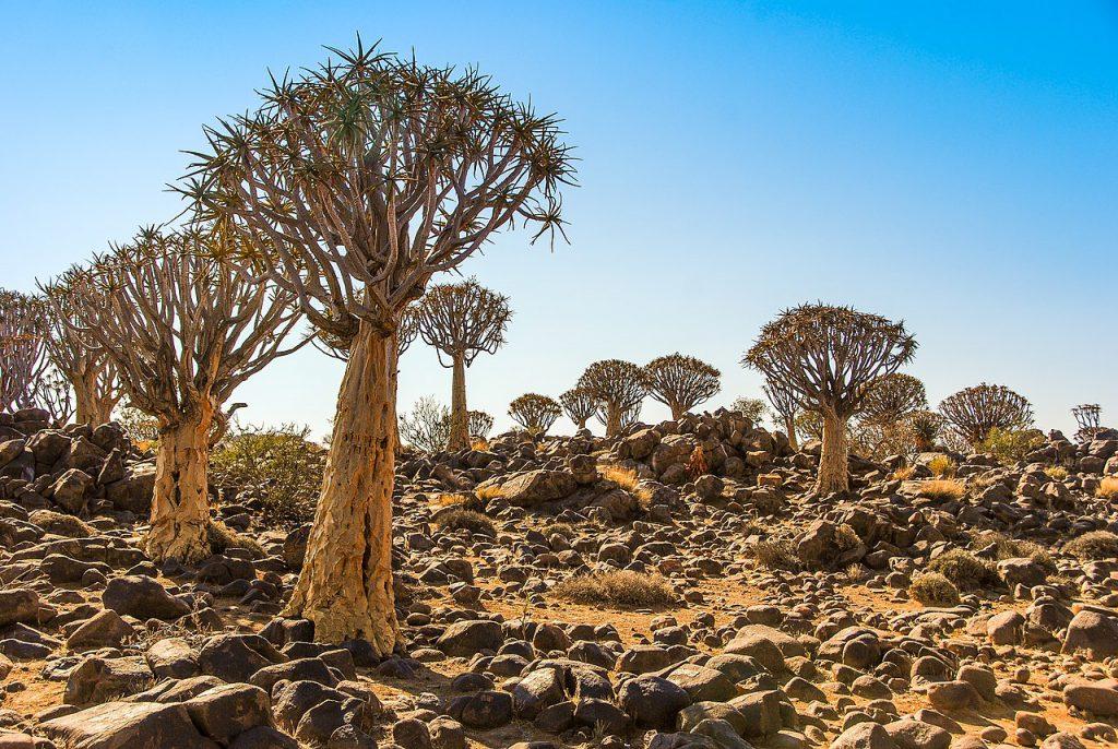 08 Day Southern Namibia Safari