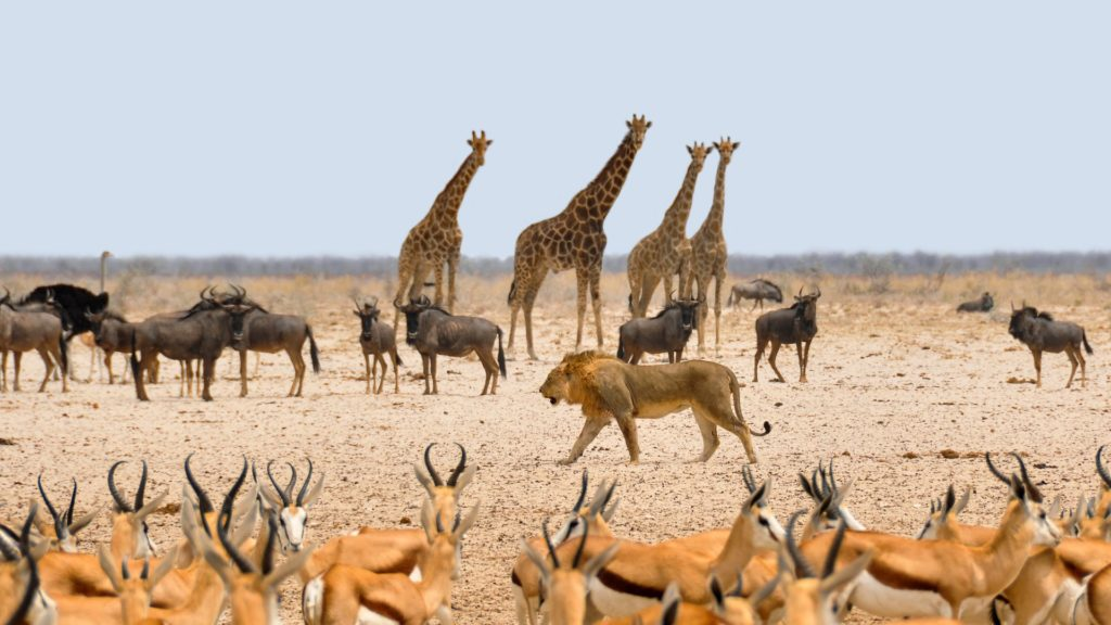 18 Day ULTIMATE Namibia and Botswana circuit safari