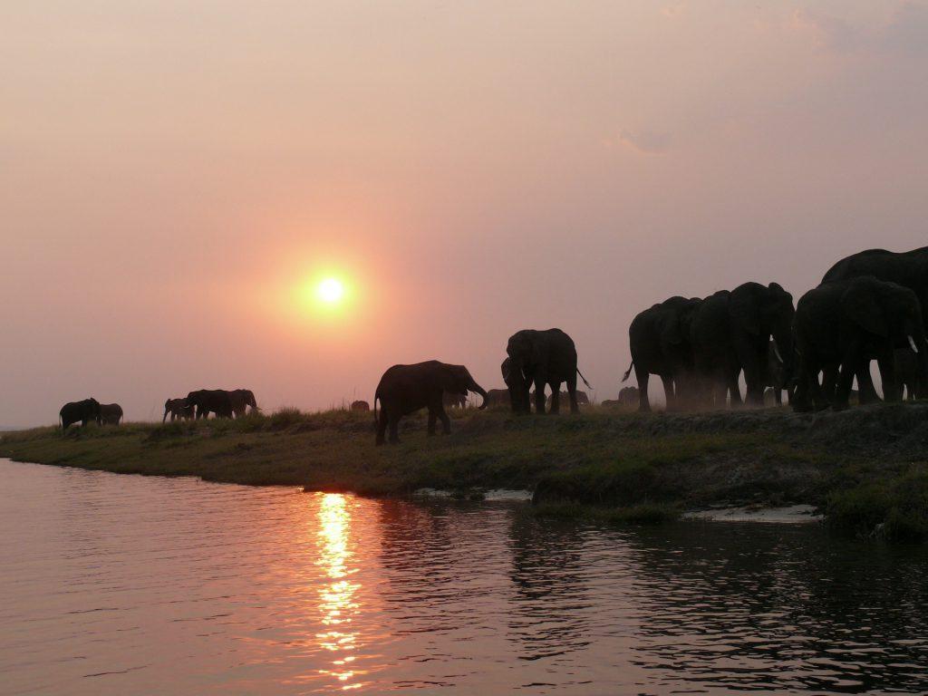 08 Day Botswana & Zambia Accommodated Safari