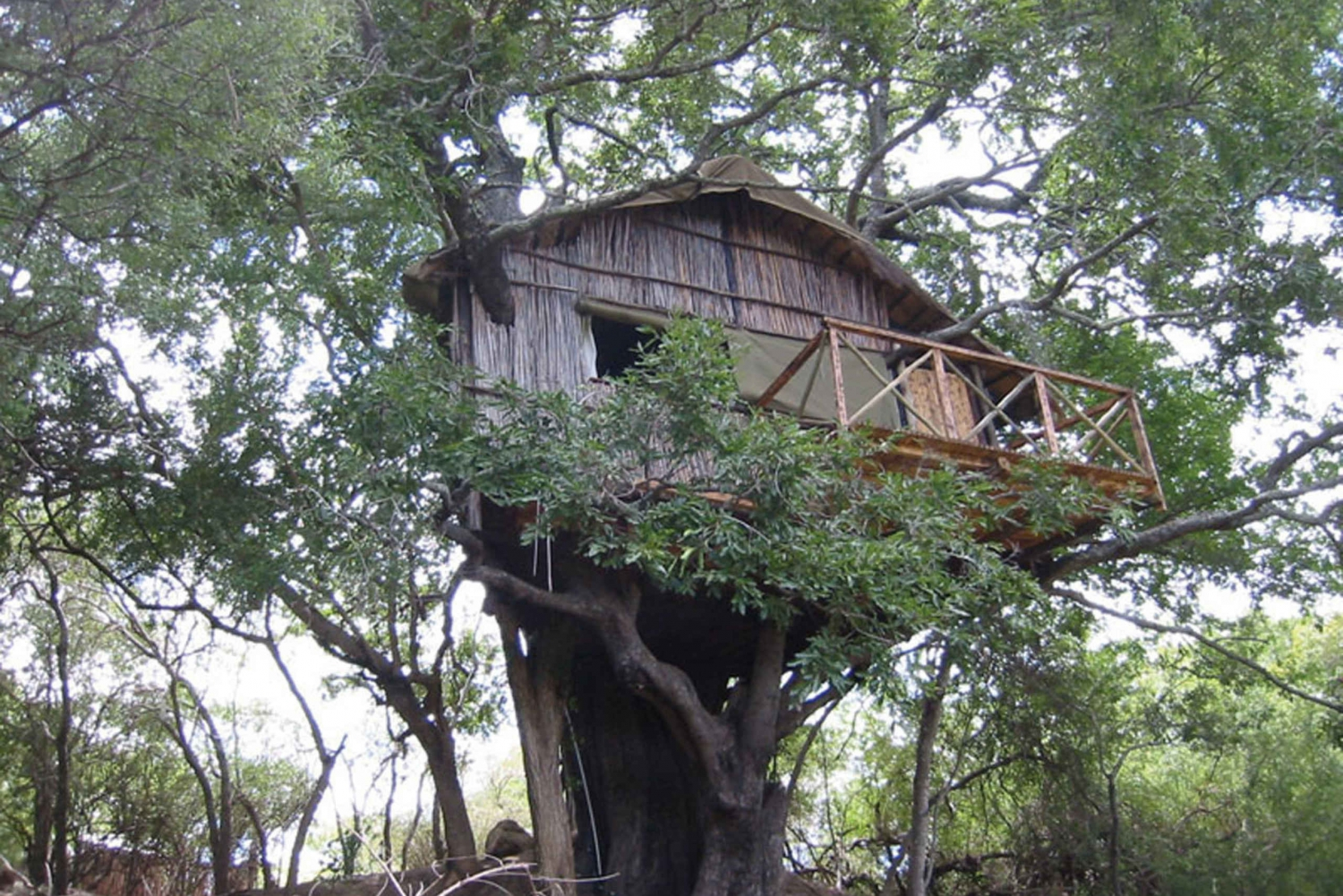 3-6 Day Treehouse Safari