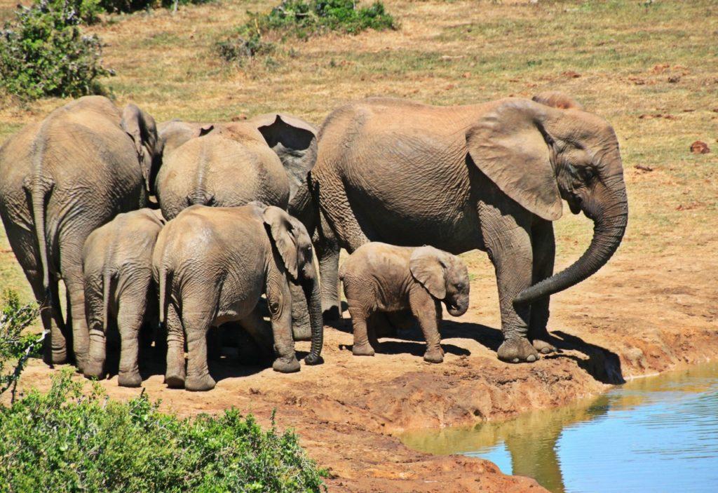 04 Day Private Kruger Park Safari