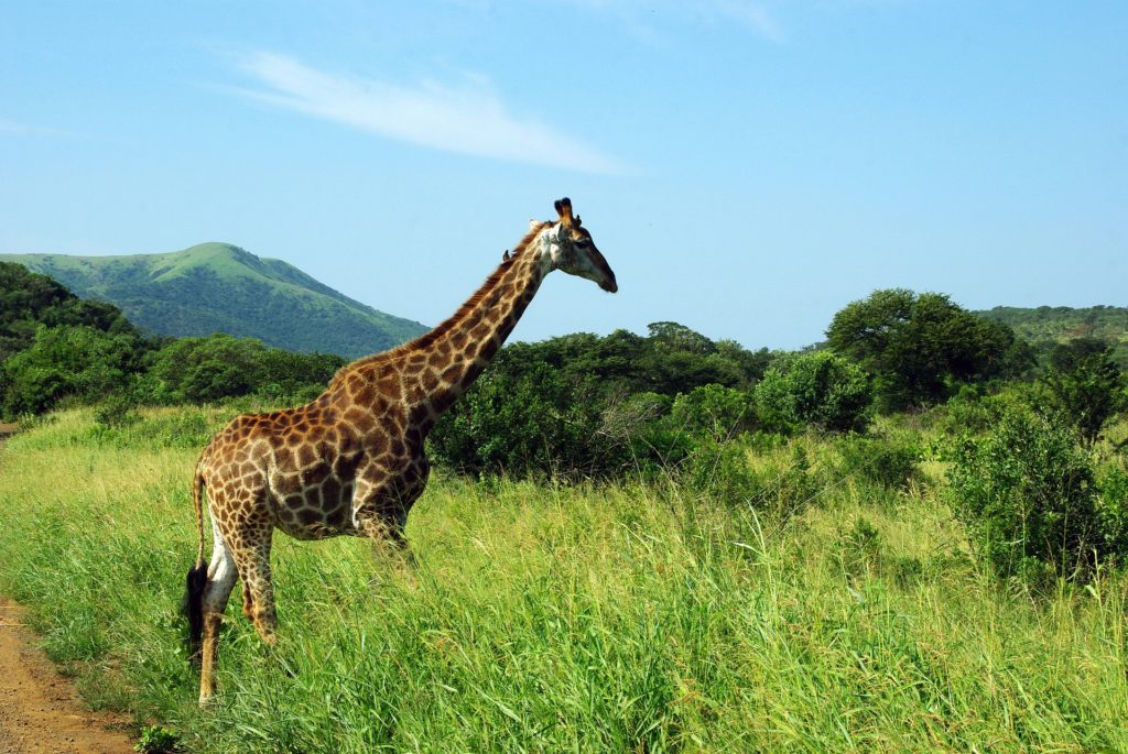 11 Day Kruger, Chobe and Vic Falls package