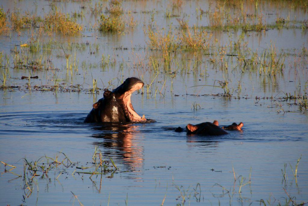 05 Day Victoria Falls Zimbabwe & Chobe National Park Safari