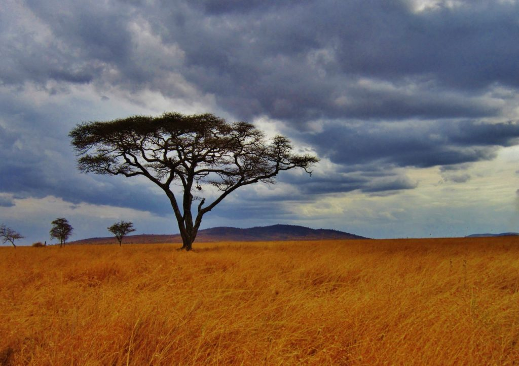 14 Day South & East Africa Safari