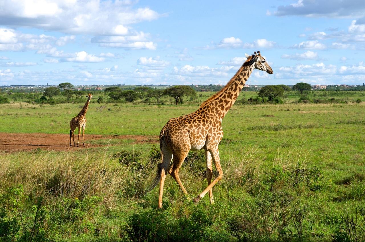 11 Day GorillaTrekking & Wildlife safari