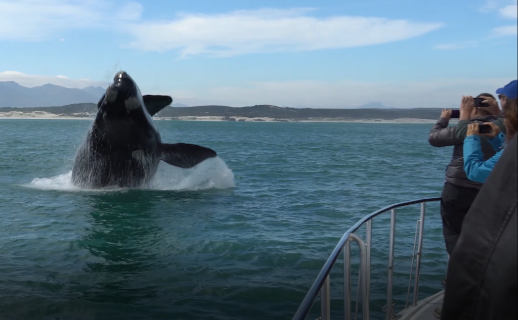 Boat Based Whale Watching